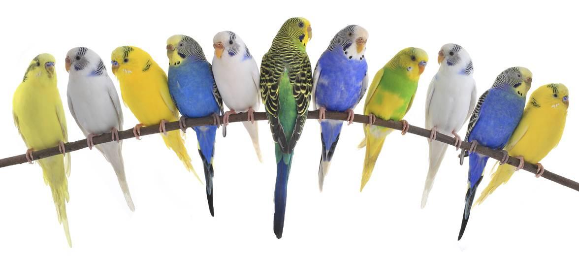 Vores fugle