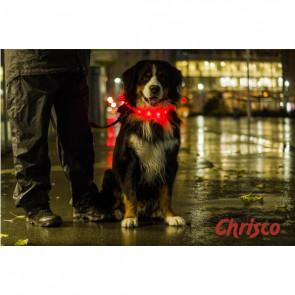 Chrisco LED-halsring i orange, 70 cm