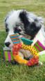 Petstages Soft Toss Ring - skønt hundelegetøj med sjove knitrelyde.