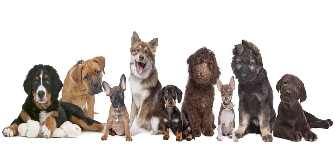 Vores hunde
