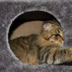 Sådan aktiverer og stimulerer du din kat