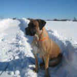 Hjælp din hund gennem nytårsaften