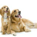 Har din hund symptomer på tand- og mundproblemer?